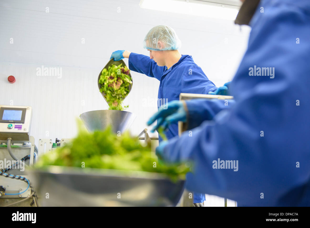 Workers weighing mixed salad leaves Stock Photo
