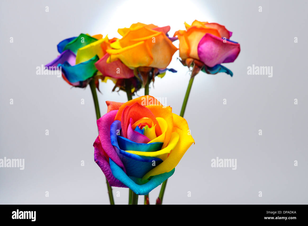 Bouquet of happy flower : rainbow rose with colored petals Stock ...