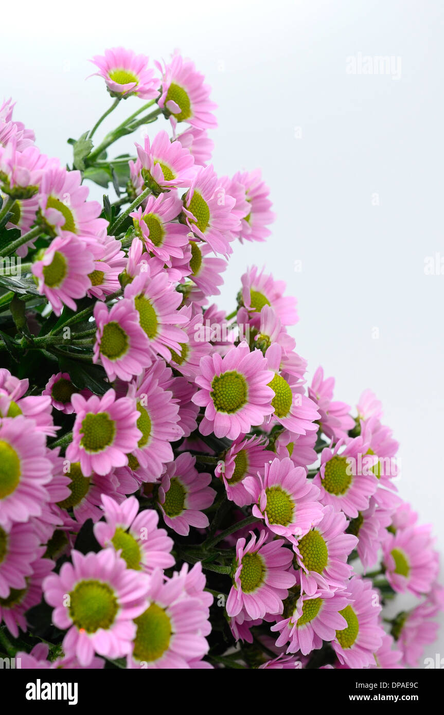 Close up of small purple daisy flowers bouquet for background Stock ...