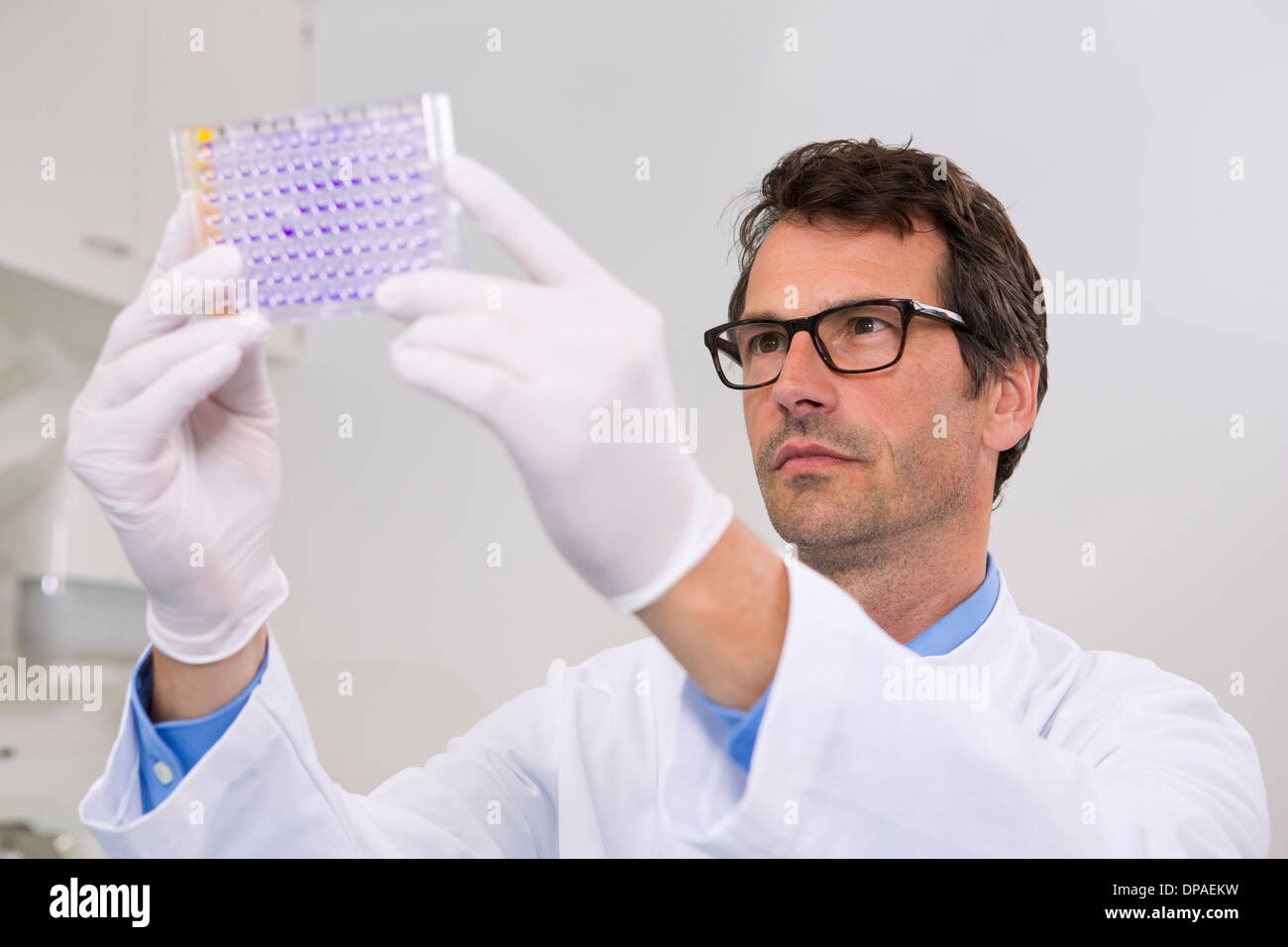 Male scientist in laboratory with 96-well microtiter plate with crystal violet solution to examine toxicity - Stock Image