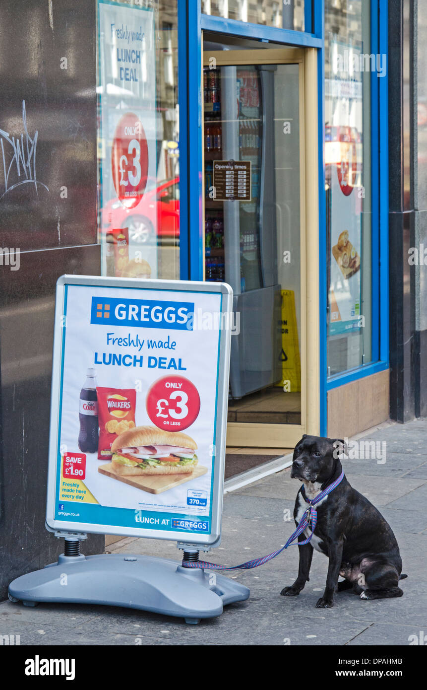 A Staffordshire Bull Terrier tethered to a sign outside a branch of Greggs the Baker in Edinburgh, Scotland, UK. - Stock Image