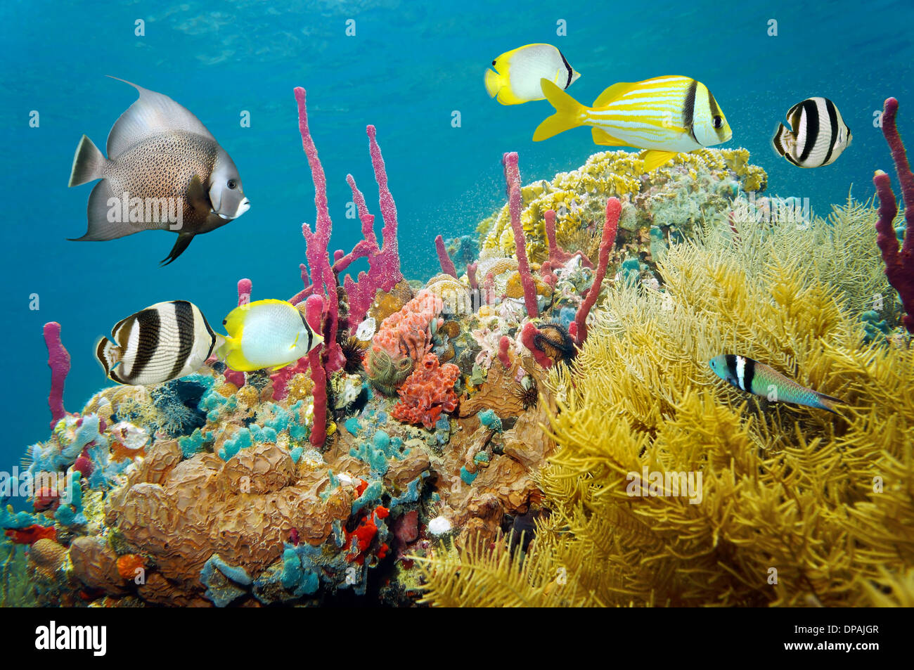 Colored Underwater Marine Life In A Coral Reef With Tropical Fish Caribbean Sea