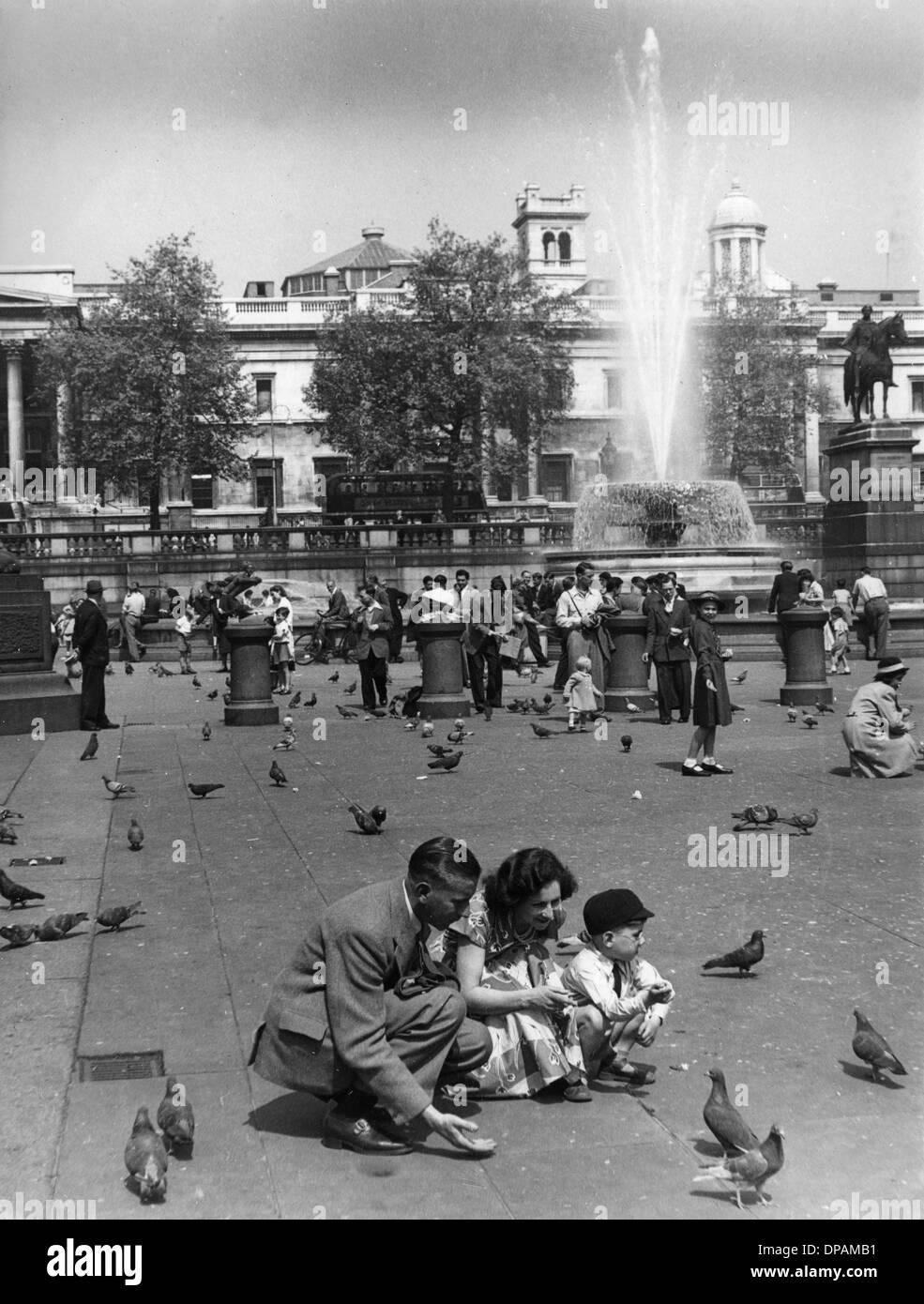 PIGEONS TRAFALGAR 1950 - Stock Image