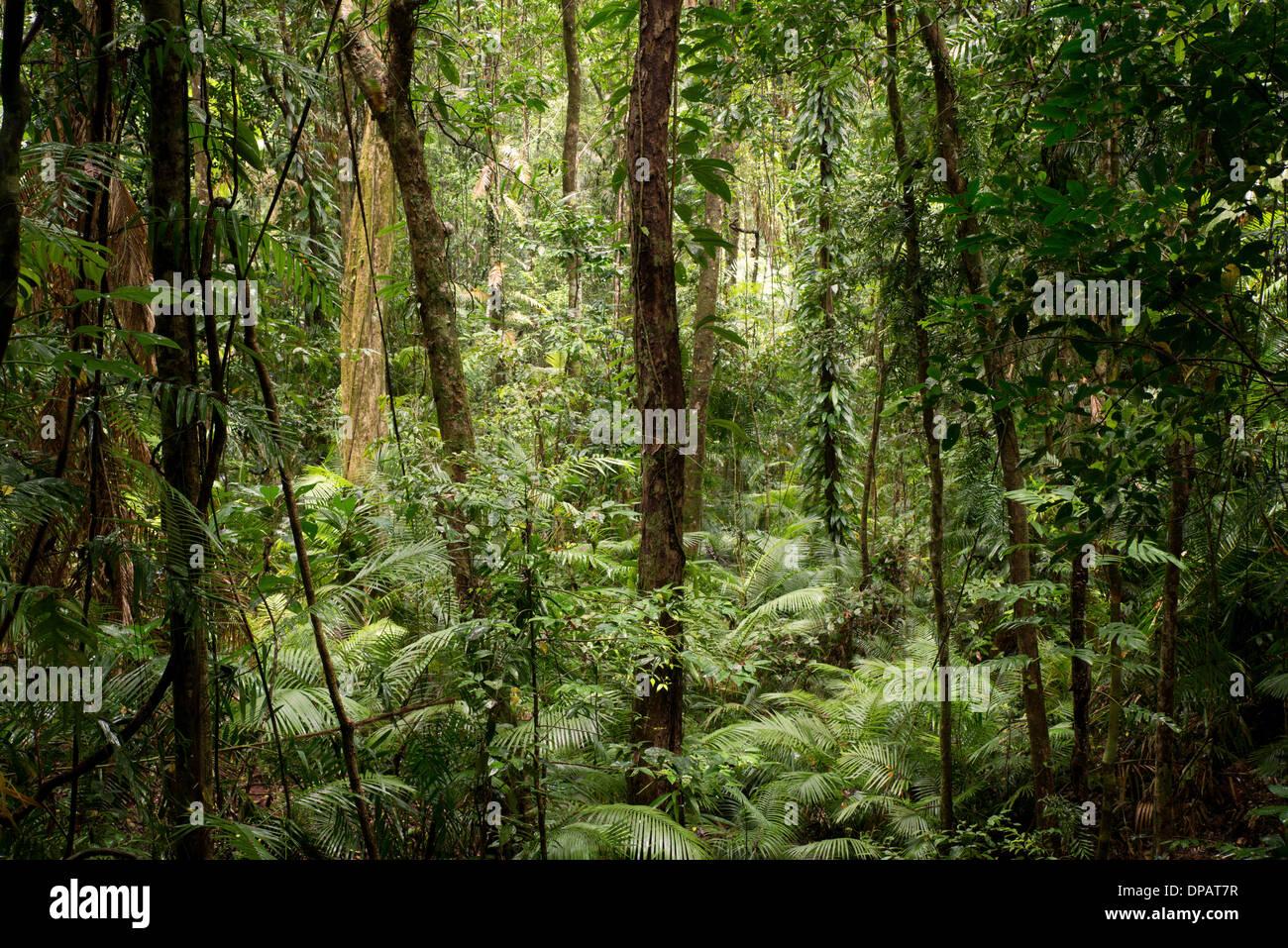 Daintree National Park, Queensland, Australia - Stock Image