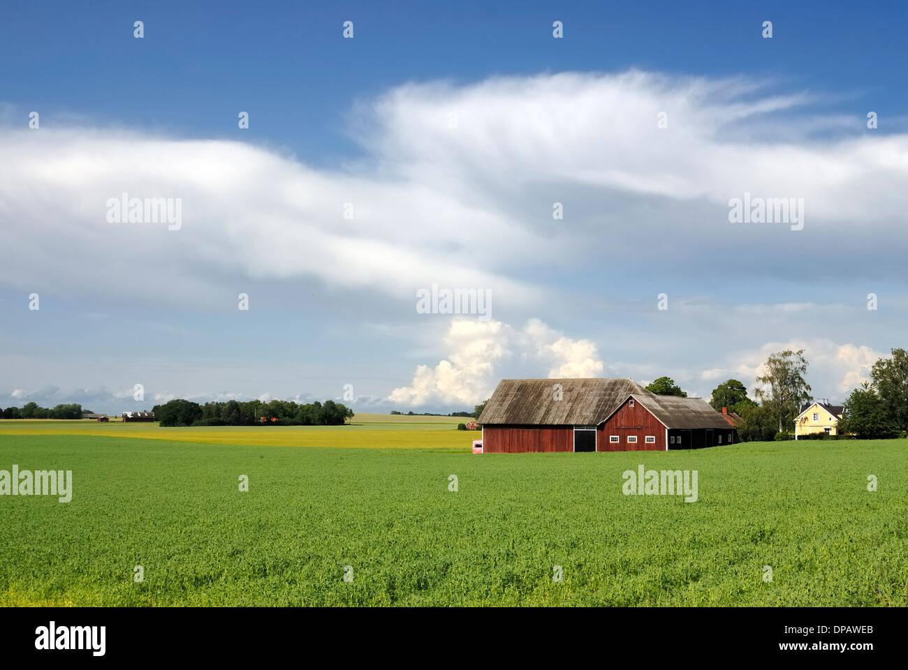 Swedish landscape - Stock Image
