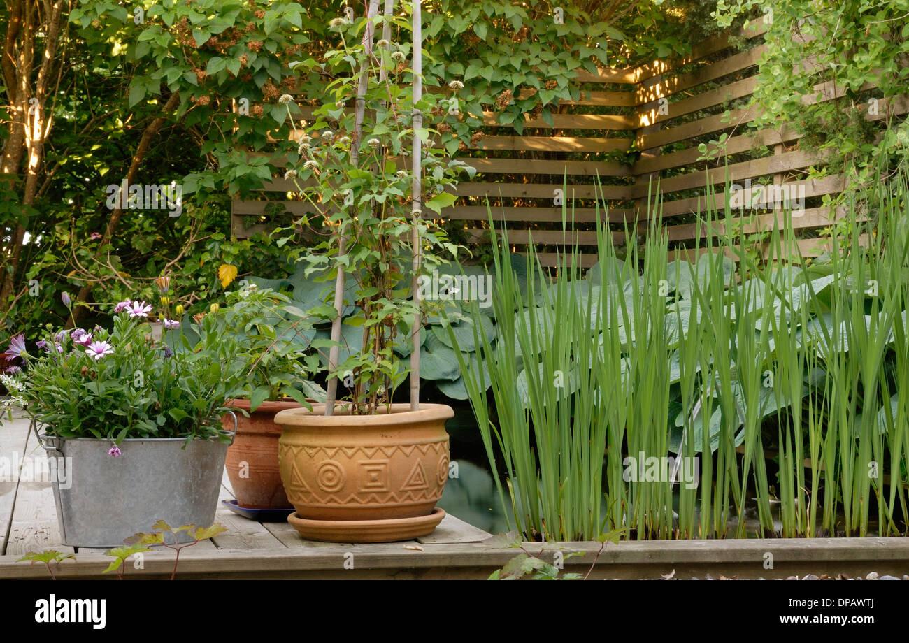 Planters   Backyard View