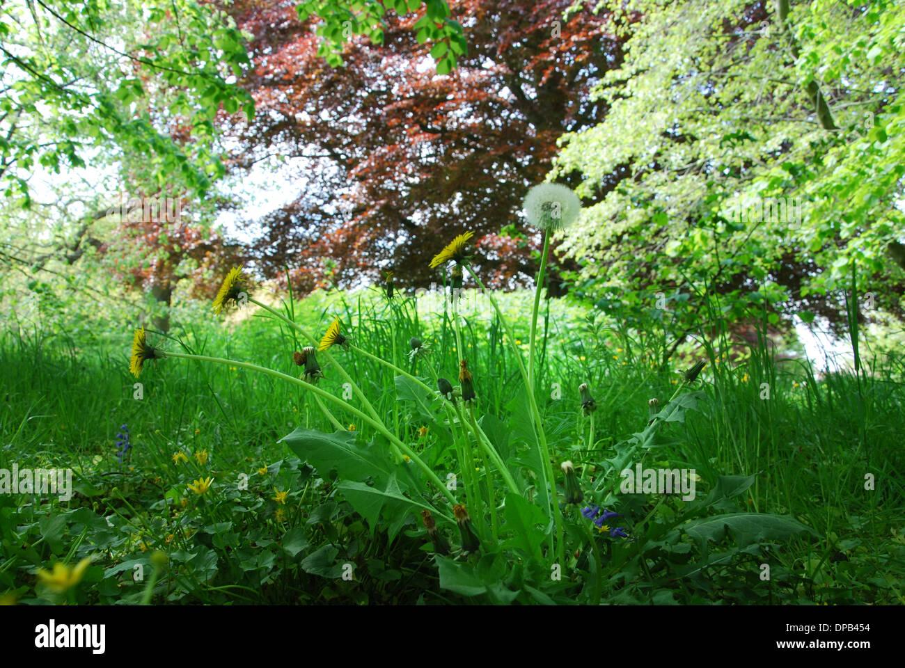 Glastonbury Abbey gardens in spring, Glastonbury UK Stock Photo