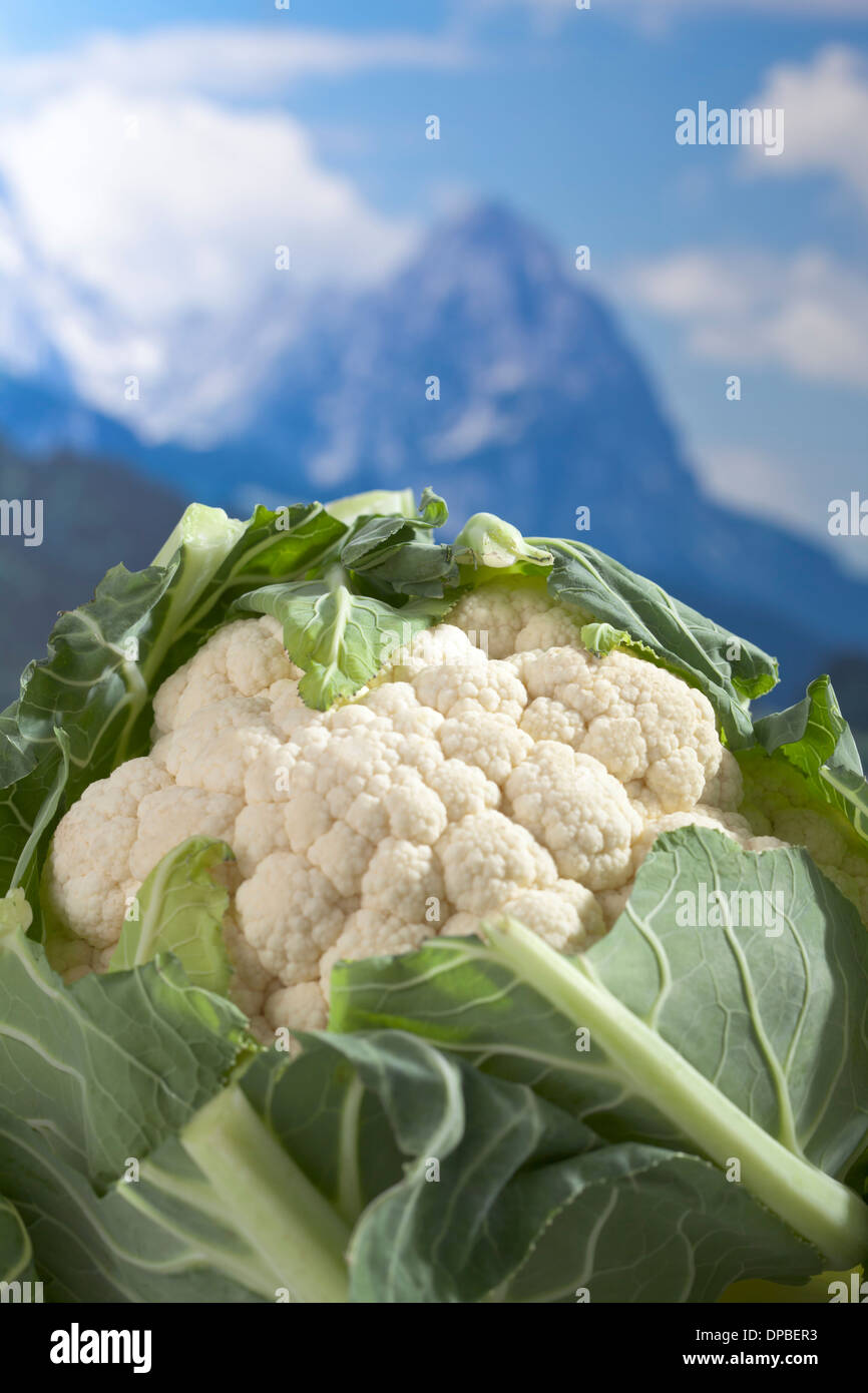 Cauliflower in front of mountain, digital composite - Stock Image