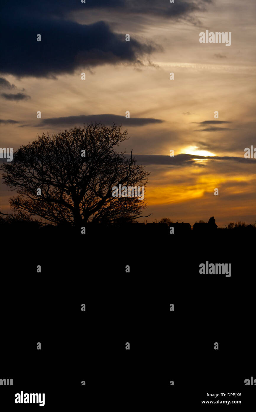 Sunset with tree in sillouette - Stock Image