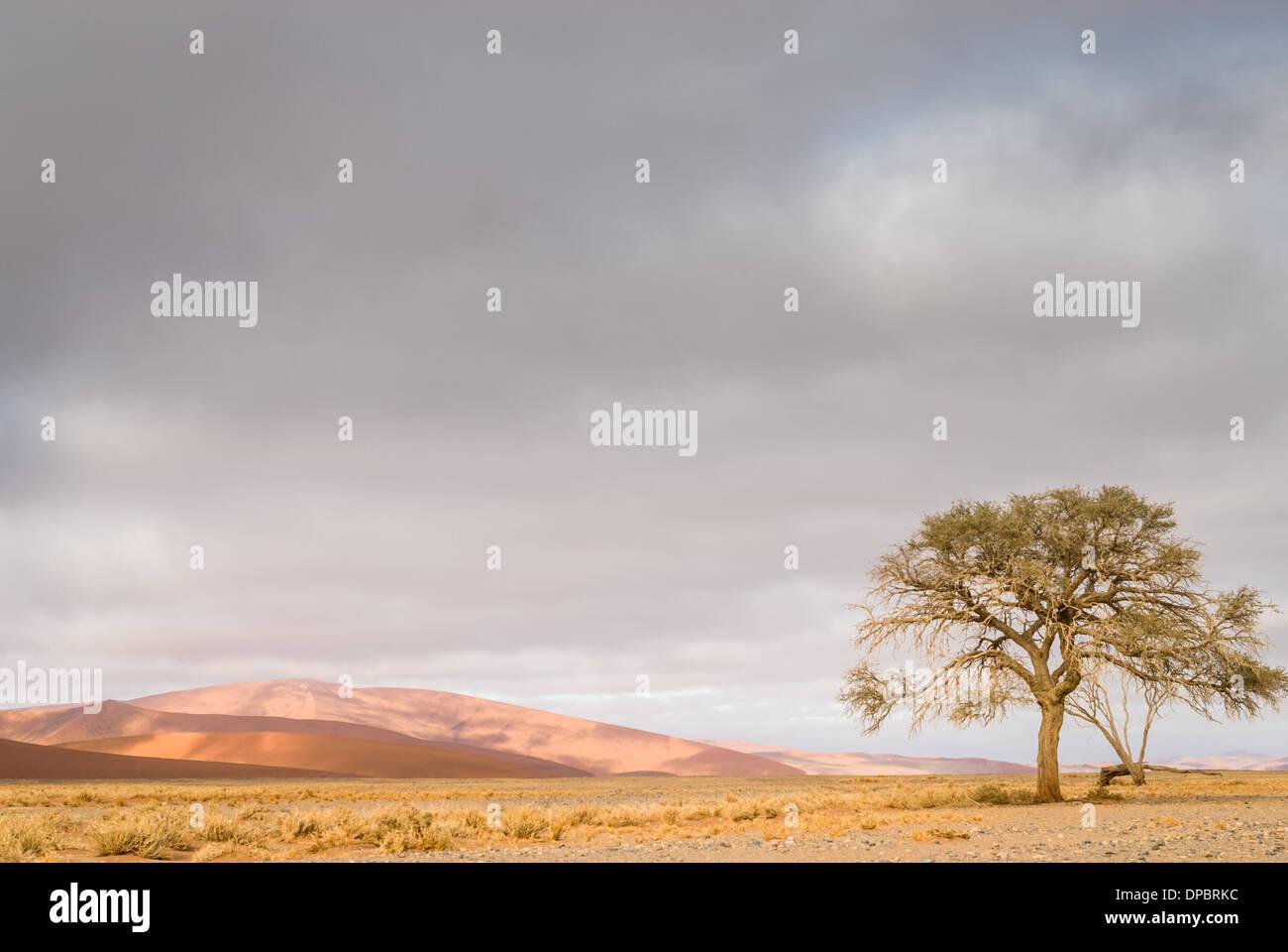Foggy sunrise over the dunes of Namib  Naukluft National Park, Sossusvlei, Namibia, Africa. - Stock Image