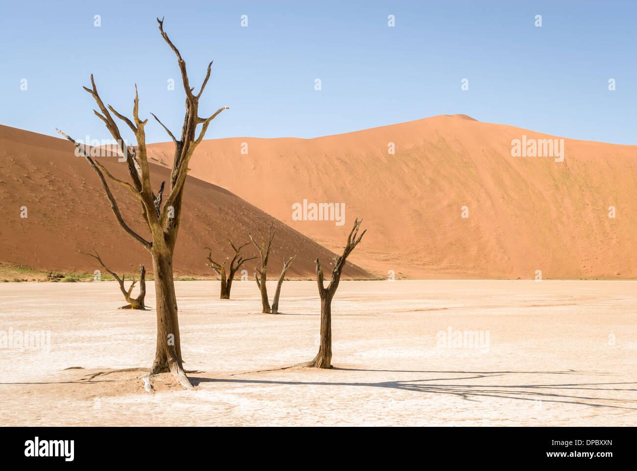 Dead trees of the Dead Vlei , Namib  Naukluft National Park, Sossusvlei, Namibia, Africa. - Stock Image