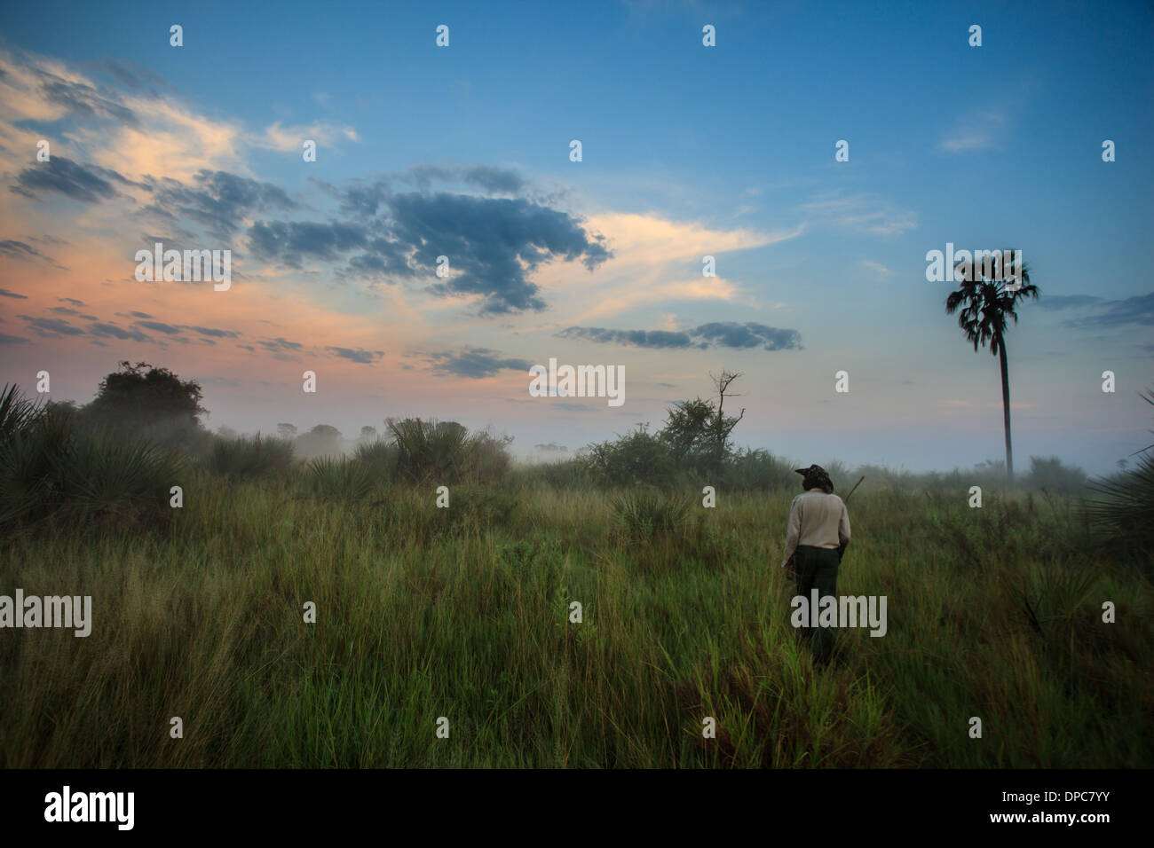 Native guide enjoys walk in wetlands as sky changes colors quickly with sunrise in Okavanga Delta, Botswana, Africa - Stock Image