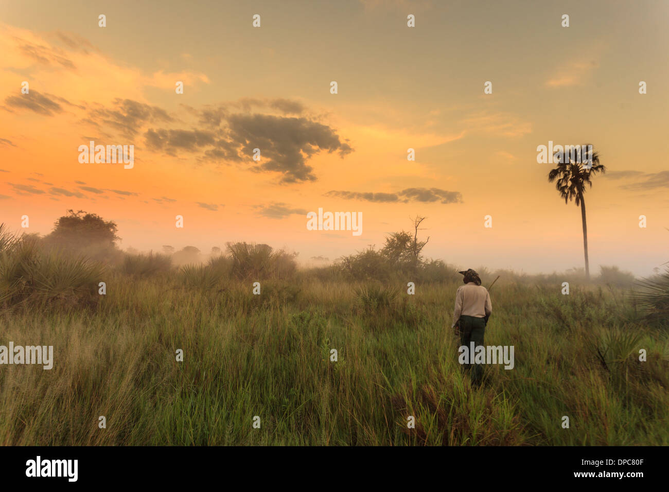 Native guide enjoys walk in wetlands as mist rises with sun's heat in Okavanga Delta, Botswana, Africa - Stock Image