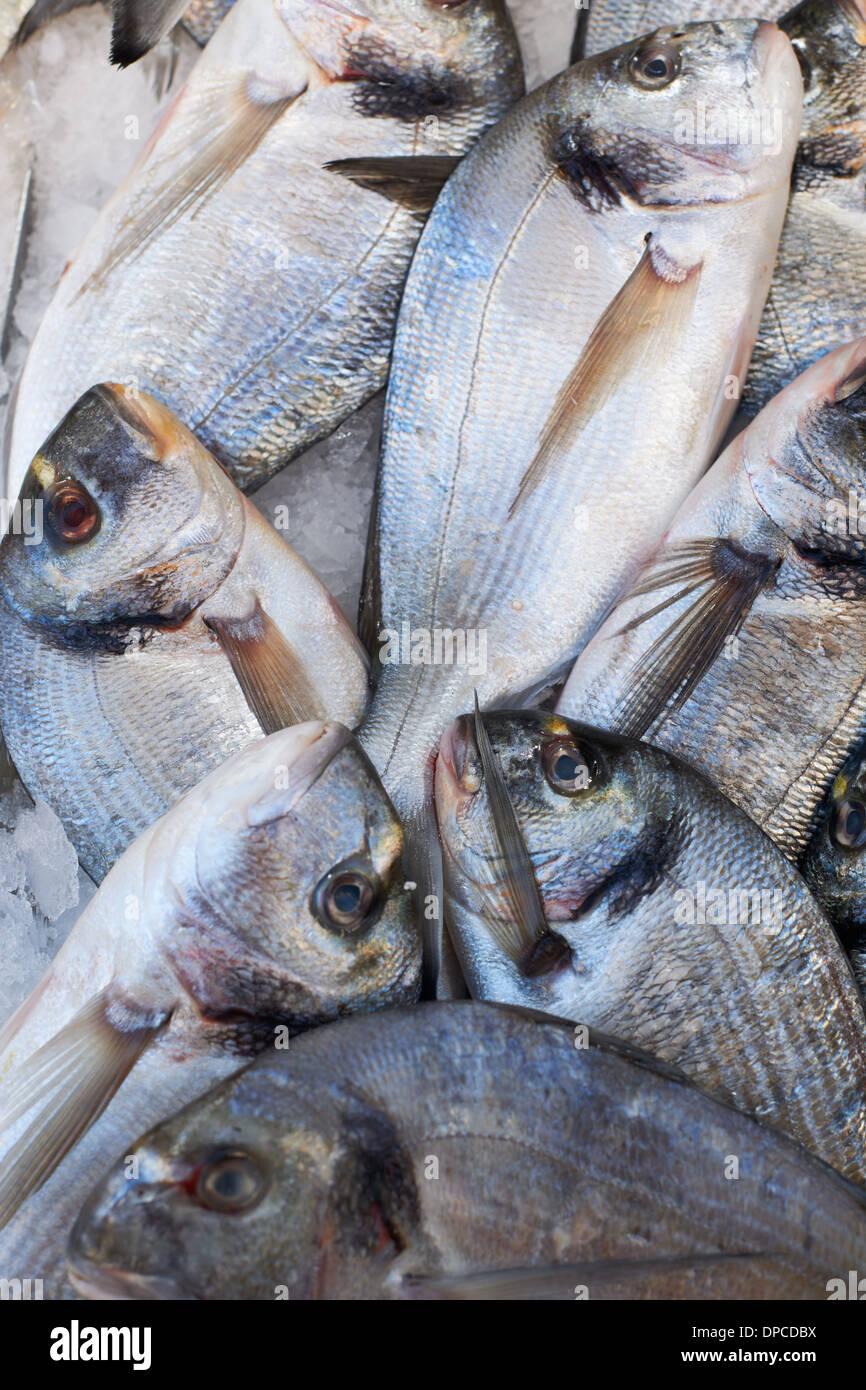 Fresh mediterranean sea-bream fish for sale on market of Marseilles, France Stock Photo
