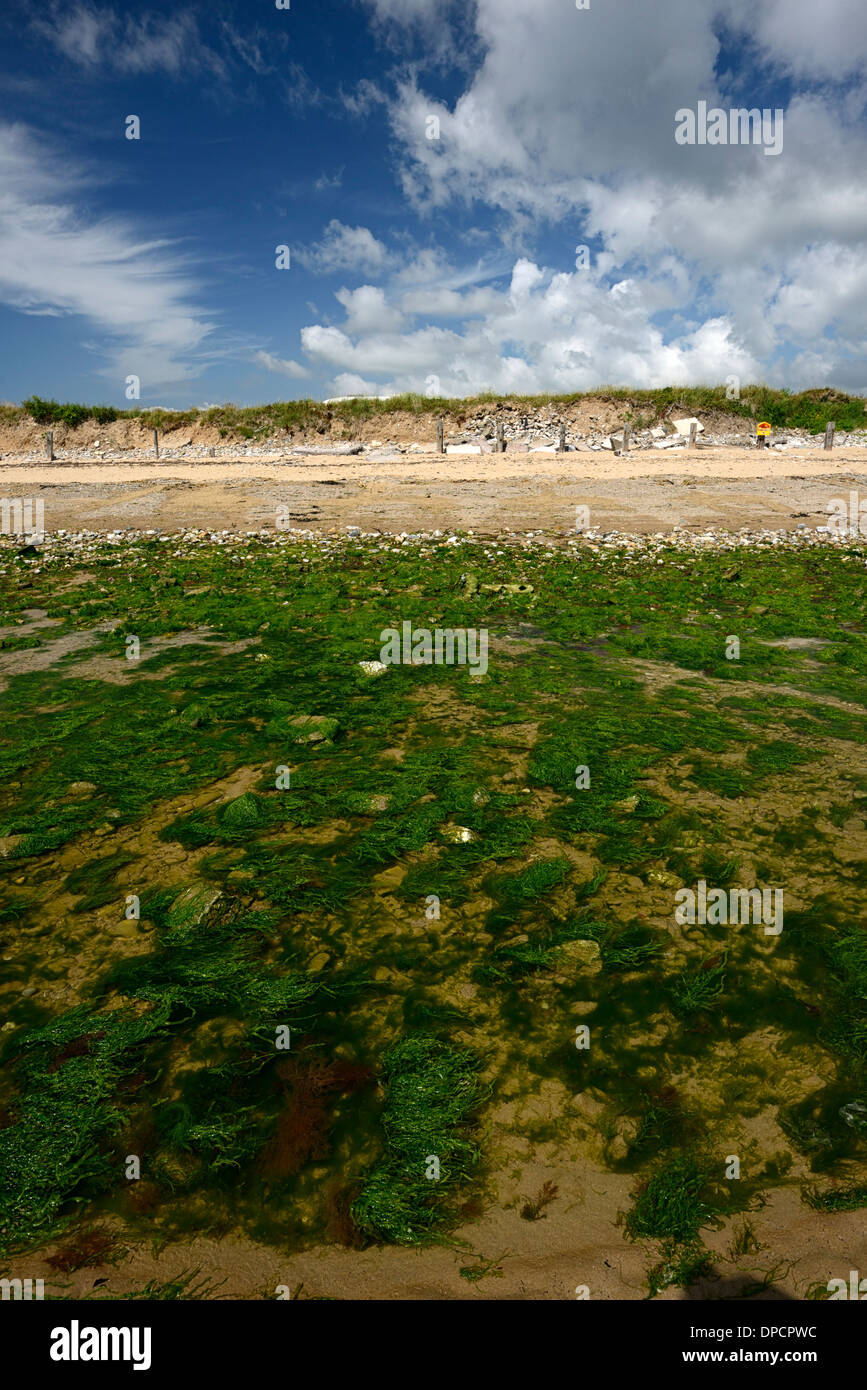 Ardmore bay waterford ireland summer seaweed in tidal pool - Stock Image