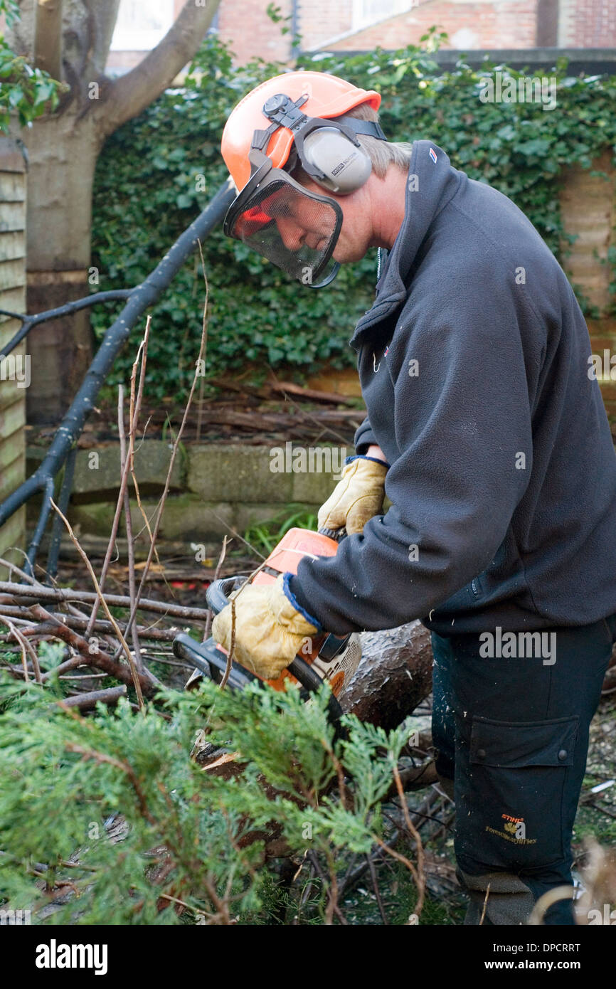 tree surgeon with chain saw cutting up tree in garden after being felled by high winds in winter storms england Stock Photo