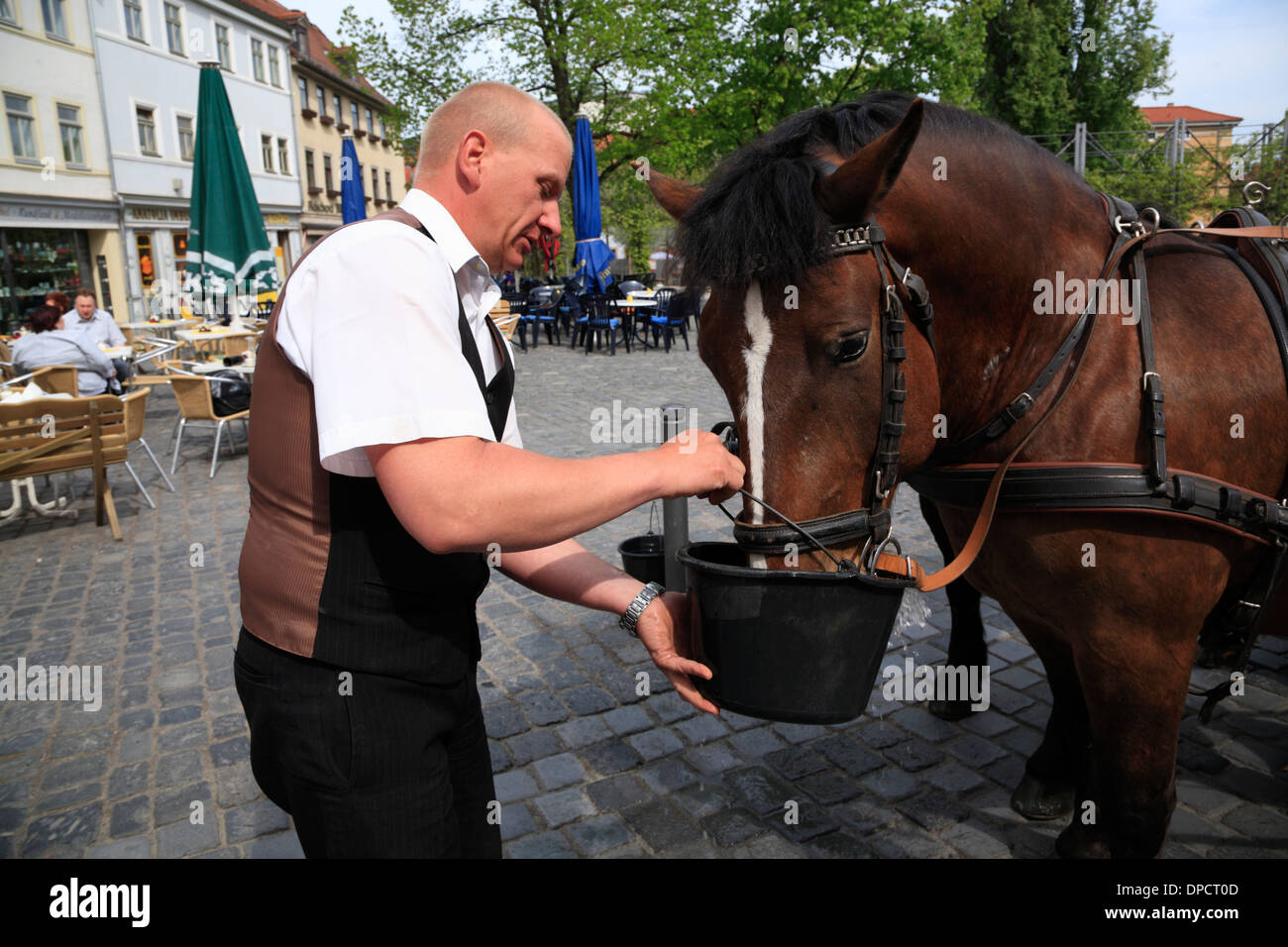 Coachman feeds his Horses  at Frauenplan, Weimar,  Thuringia, Germany, Europe - Stock Image