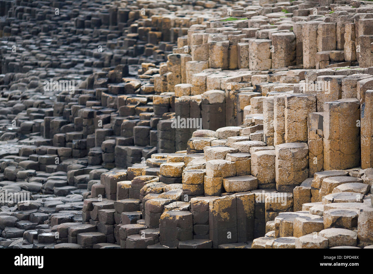 Multi colored stacks of basalt columns that make up the world famous Giants Causeway in County Antrim. A popular destination - Stock Image
