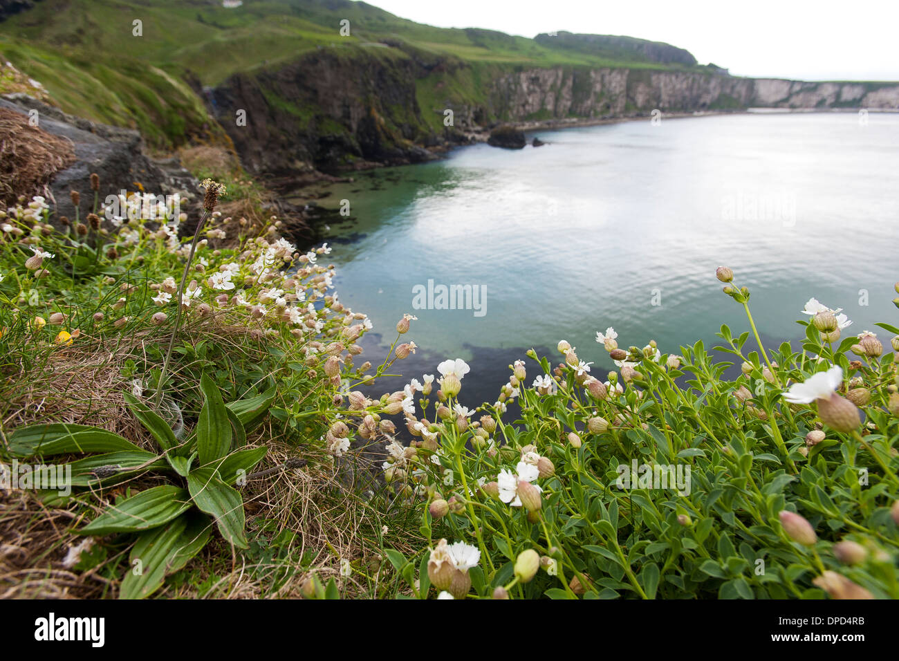 Looking at the view along the Antrim coast seen from Carrickarede Island a National Trust property in Northern Ireland. - Stock Image