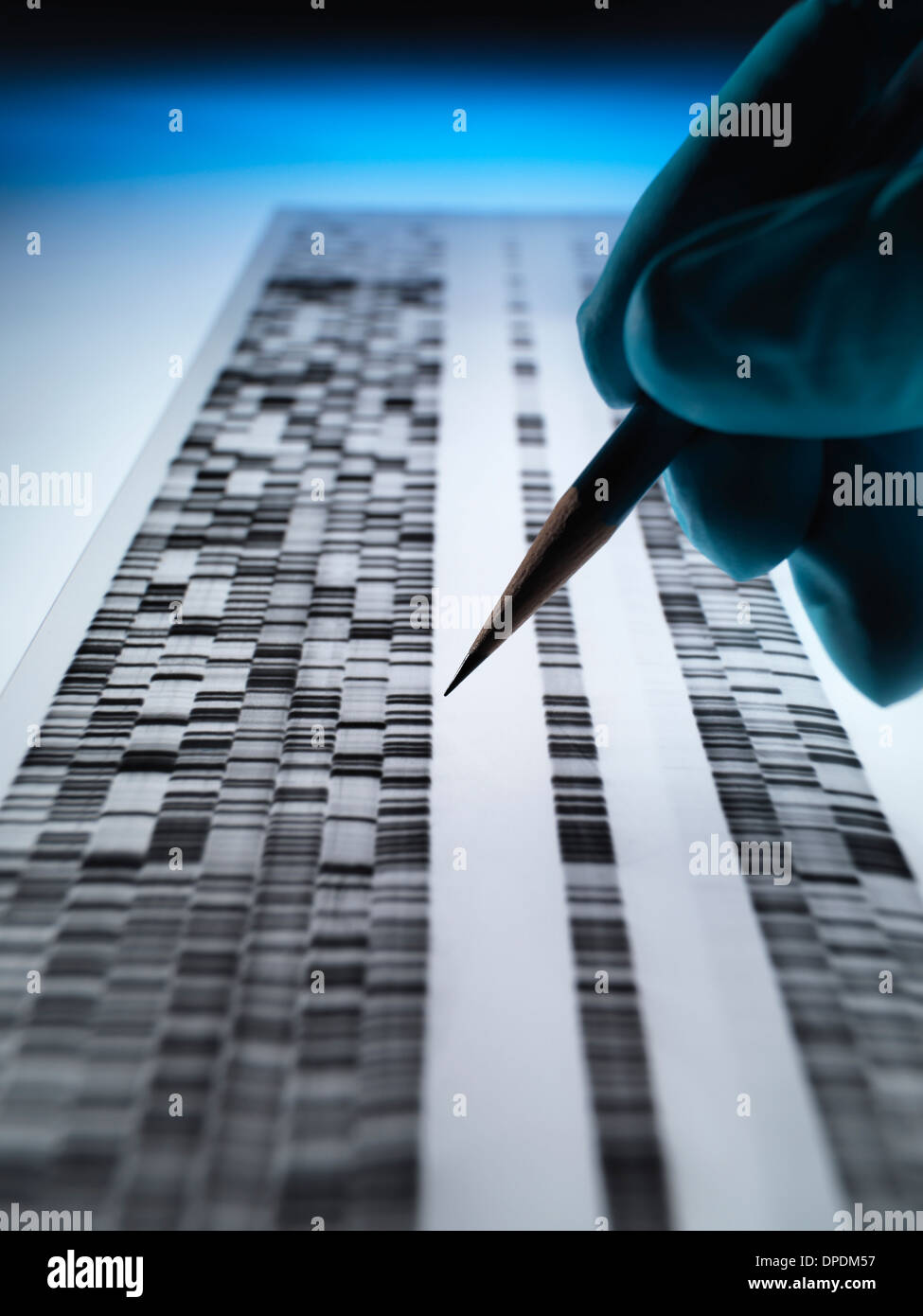 Scientist viewing DNA gel used in genetics, forensic, pharma research, biotechnology and biomedical science - Stock Image