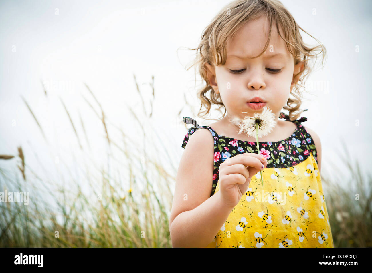 Portrait of female toddler with dandelion clock - Stock Image