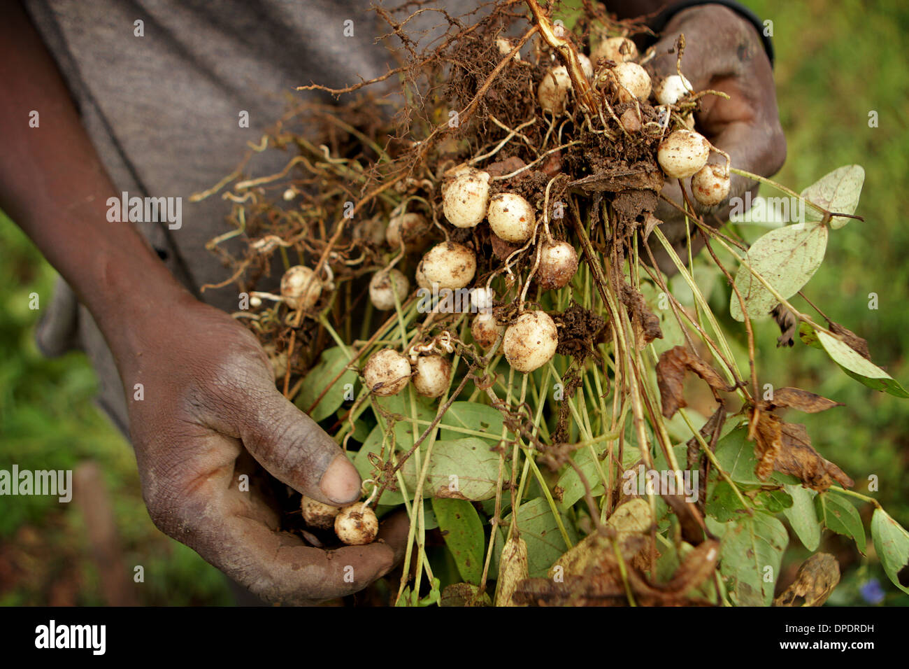 African farmer showing off subsistence crops - Stock Image