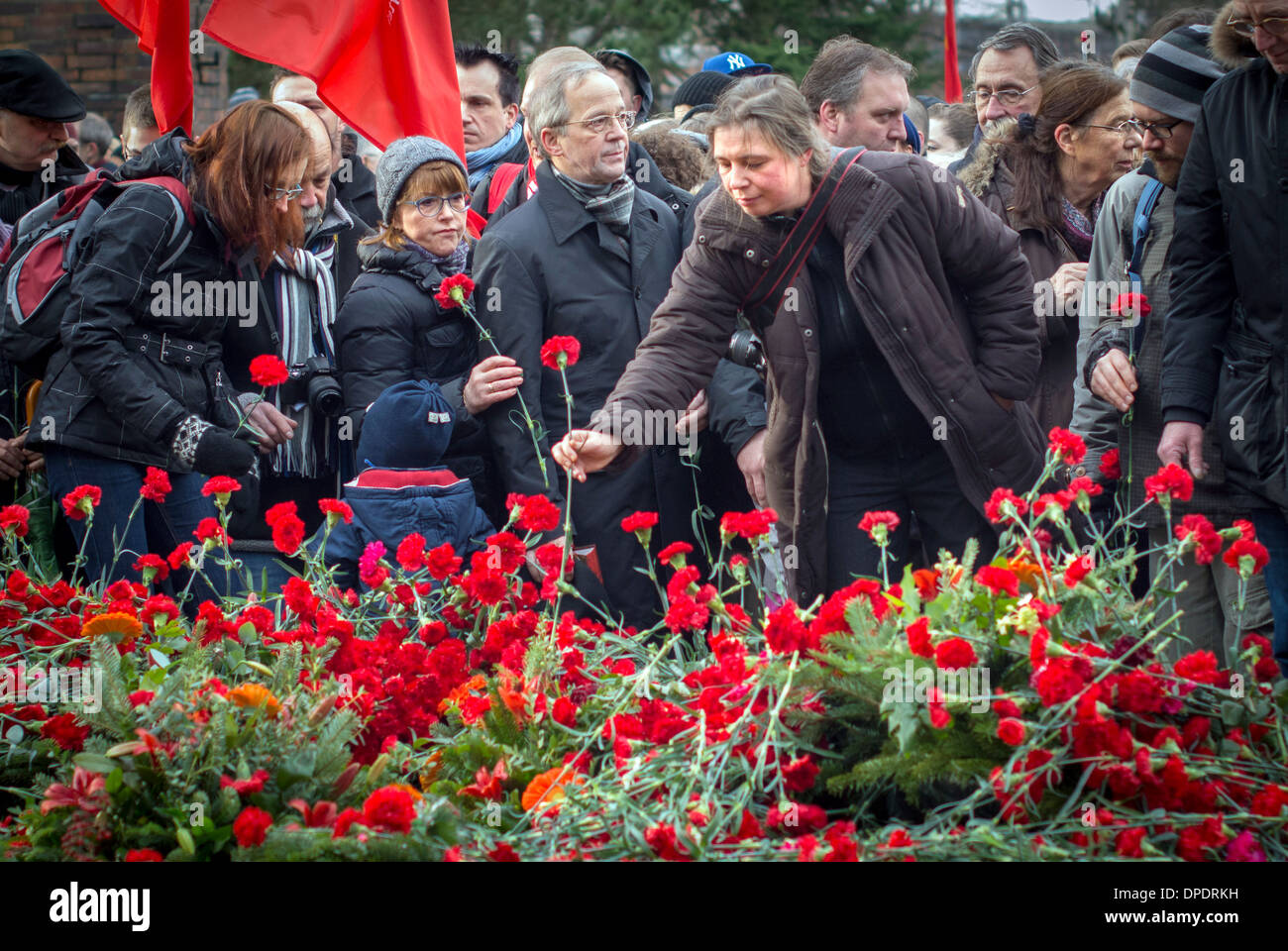Carnations laid at 'Memorial for Socialists', Friedricksfelde Cemetery,Berlin. In memory of Rosa Luxemburg & Karl Liebknecht. - Stock Image