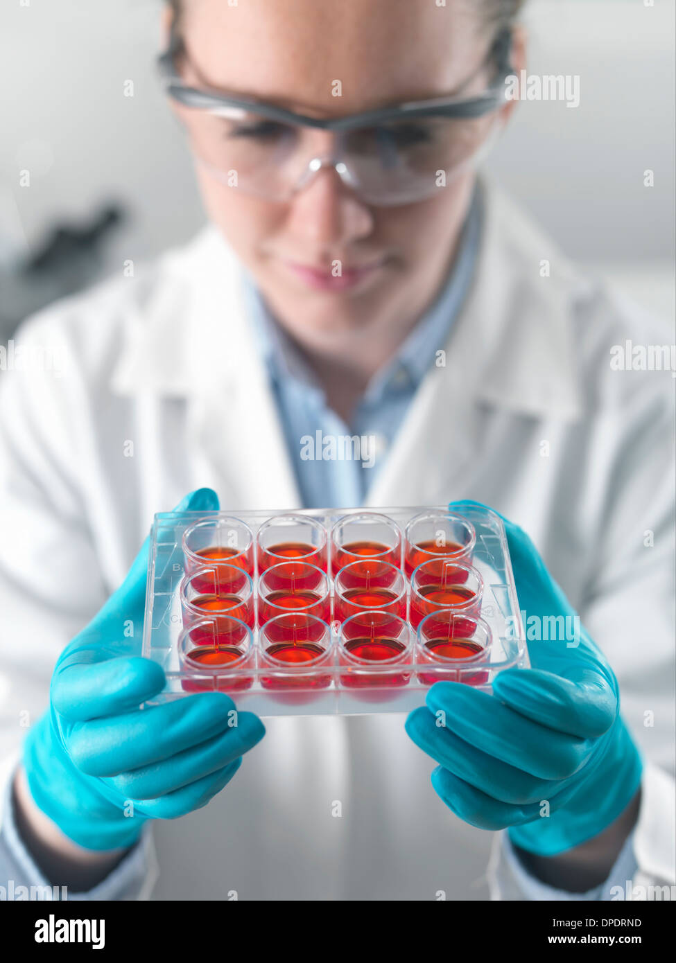 Female scientist examining stem cell cultures in laboratory - Stock Image