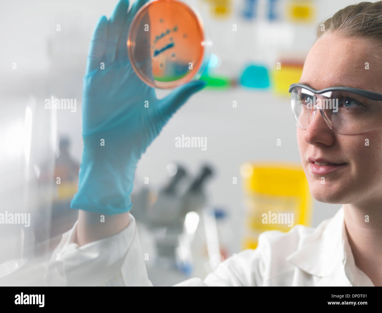 Female scientist examining microbiological cultures in a petri dish - Stock Image