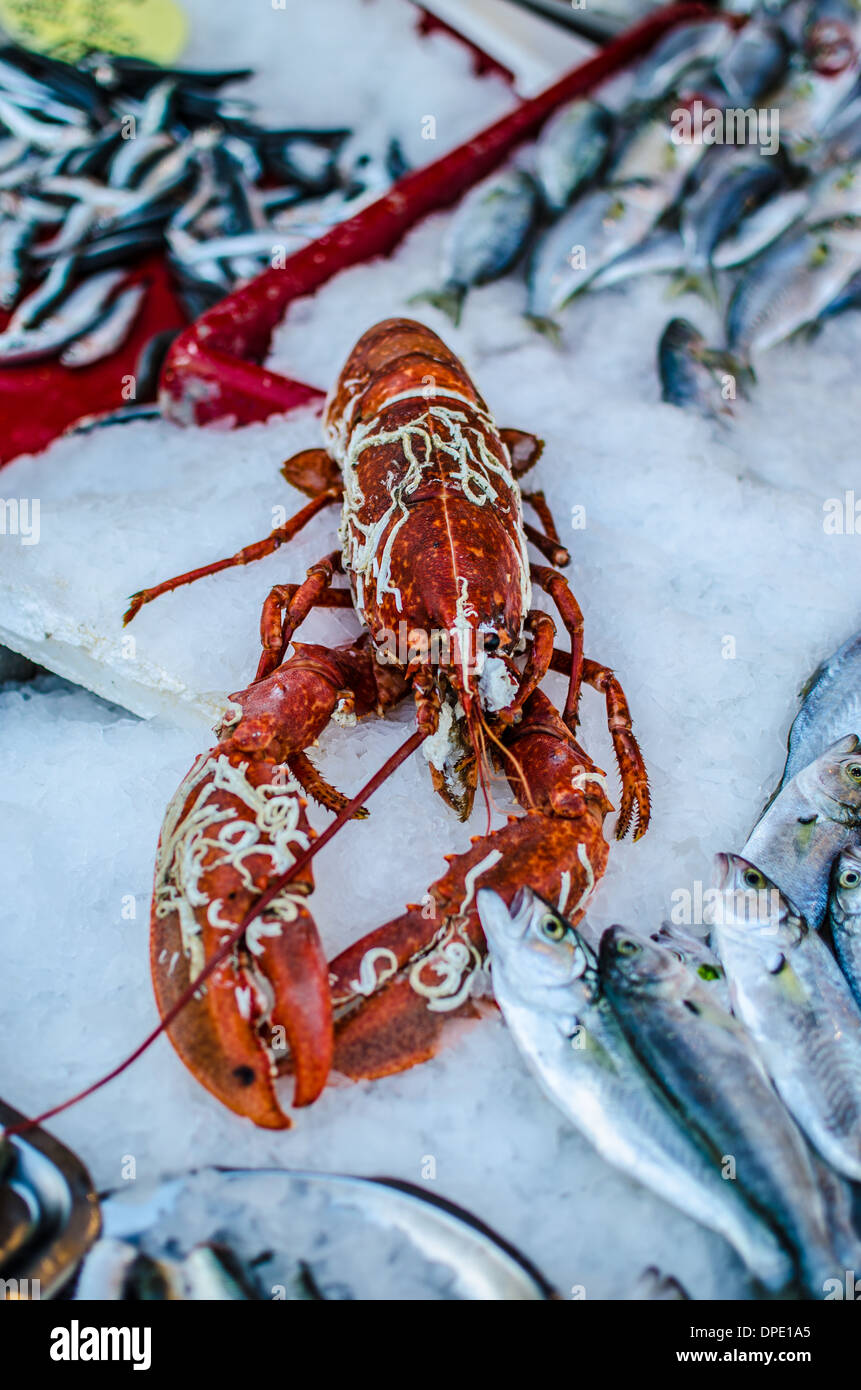Lobster on sale at a market stall Stock Photo: 65461933 - Alamy