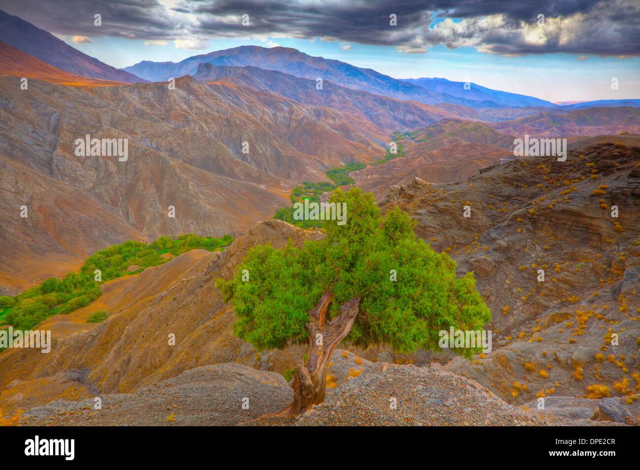 Atlas cedar in Atlas Mountains seen from Tizi n'Tichka Road, Morocco Cedrus atlantica - Stock Image