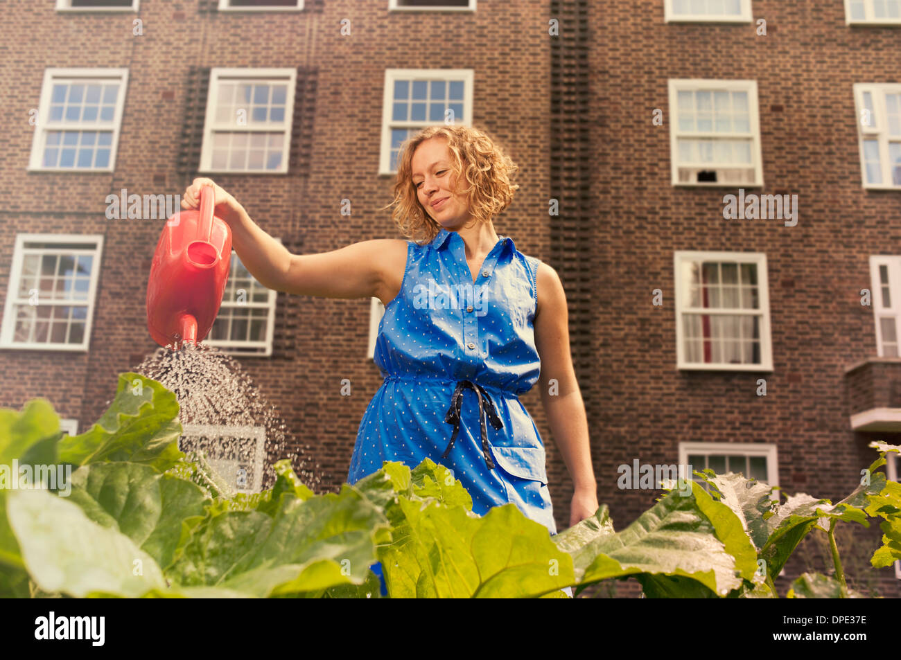 Young woman watering vegetables on council estate allotment Stock Photo