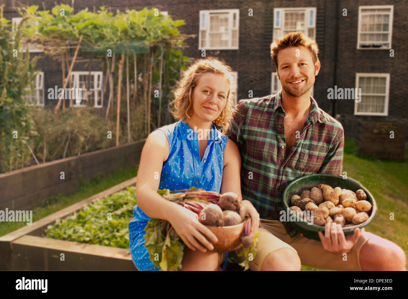 Couple with harvested potatoes and beets on council estate allotment - Stock Image