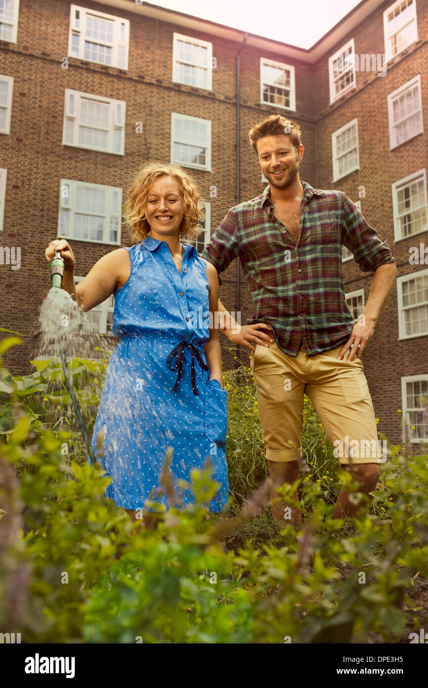 Couple watering vegetables on council estate allotment - Stock Image