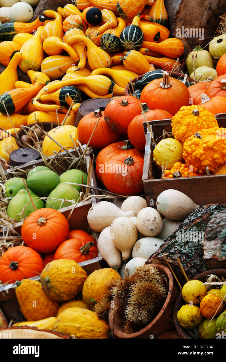 Composition of pumpkins and summer and winter squashes Stock Photo