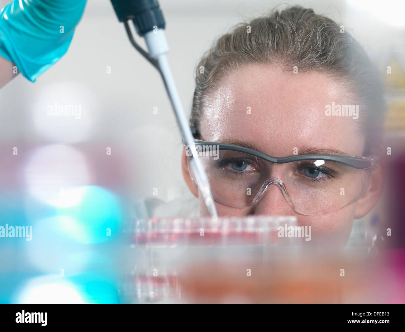 Scientist pipetting stem cell cultures into tray for pharmaceutical research - Stock Image
