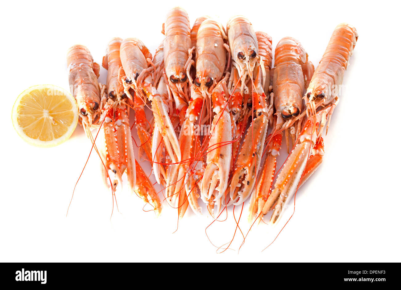 Dublin Bay Prawn in front of white background - Stock Image