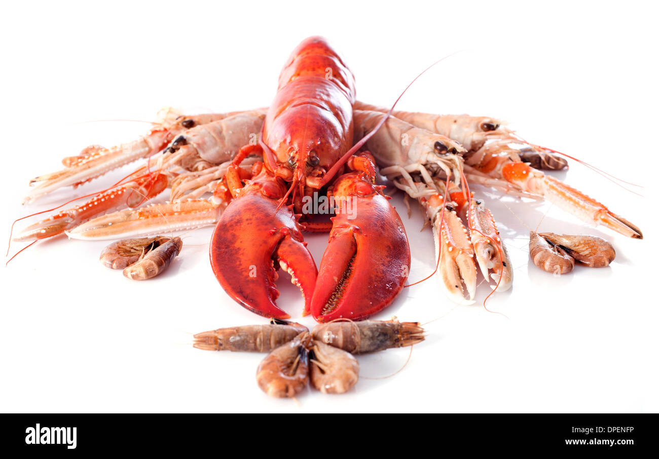 various seafood in front of white background - Stock Image