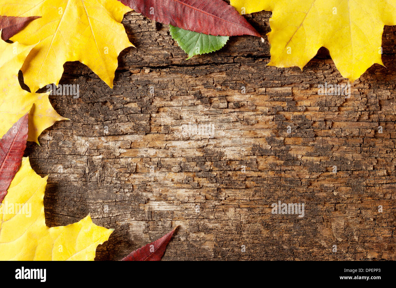 Background of old wooden planks with yellow autumn leaves - Stock Image
