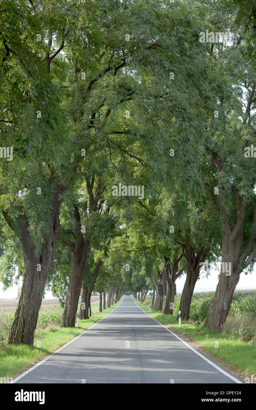 Country road lined by trees, Lower Saxony, Germany - Stock Image