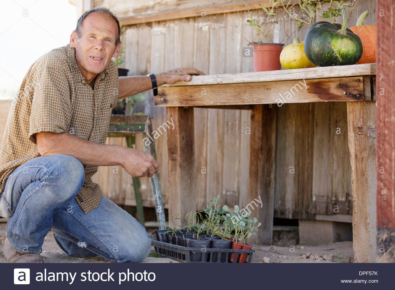 Portrait of farmer outside barn with pumpkins and plants - Stock Image