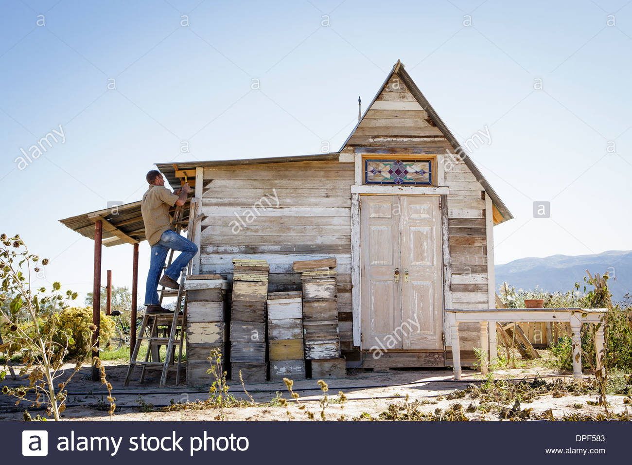 Farmer on ladders repairing wooden barn - Stock Image