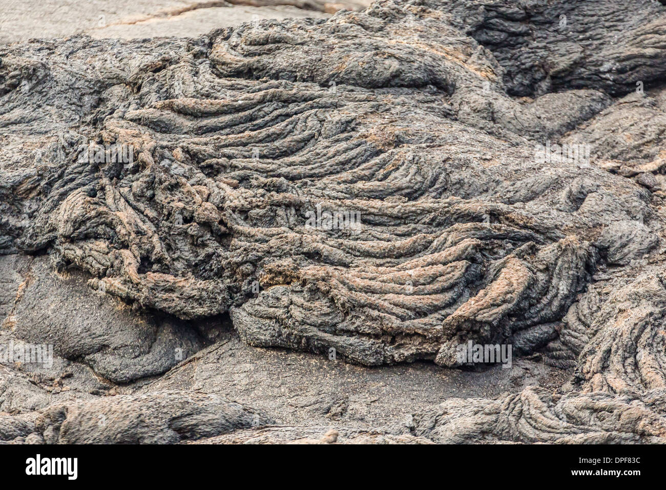 Example of pahoehoe lava on Fernandina Island, Galapagos Islands, Ecuador, South America - Stock Image