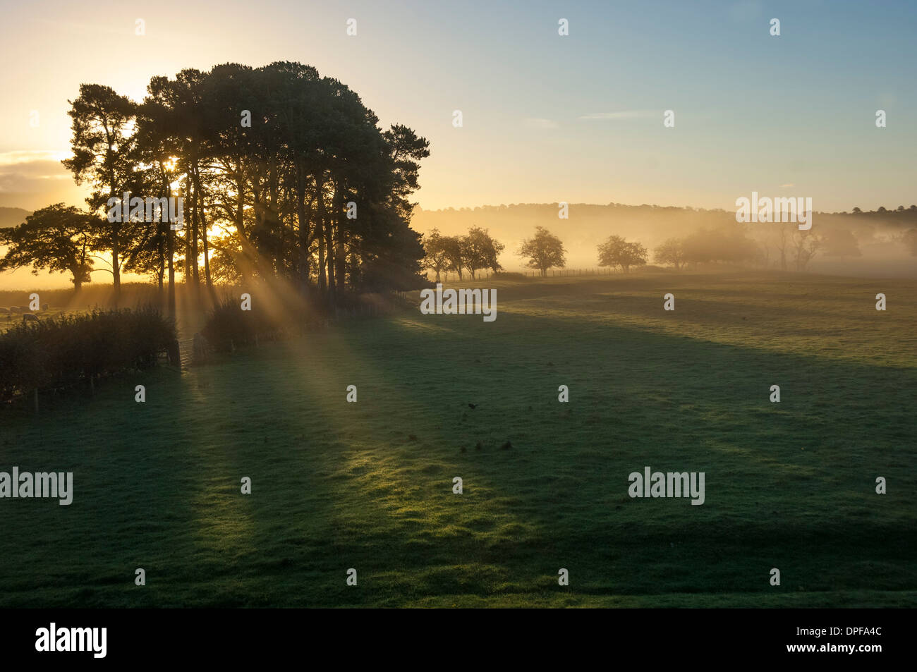 Early morning by Eden Bridge, Eden Valley, Cumbria, England, United Kingdom, Europe - Stock Image