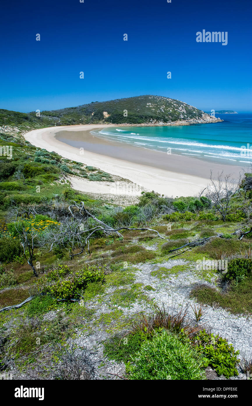 Long wide sandy beach in the Wilsons Promontory National Park, Victoria, Australia, Pacific - Stock Image