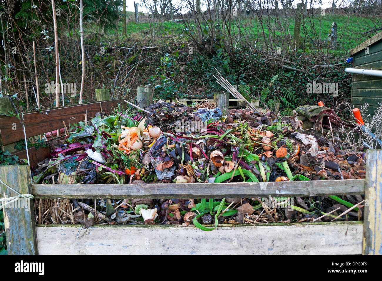 Vegetable waste rotting in garden compost in wooden composting bin in winter in Carmarthenshire Wales UK   KATHY DEWITT - Stock Image
