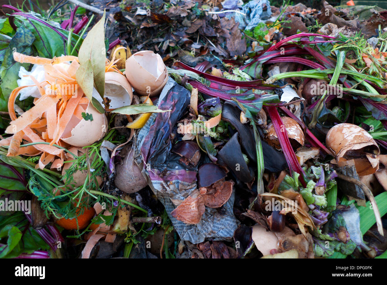 Garden compost heap in bin with eggshells and rotting vegetable kitchen food waste in Wales UK   KATHY DEWITT - Stock Image