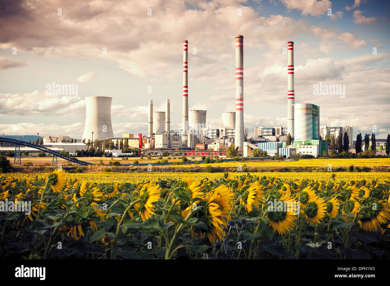 the power station Pocerada with sunflower field - Stock Image