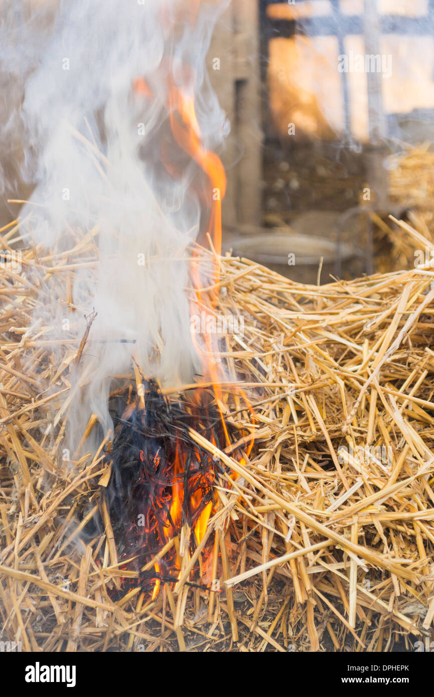 Traditional way of killing a pig in rural Romania -  Grain straws covering a slaughtered pig are set on fire - Stock Image