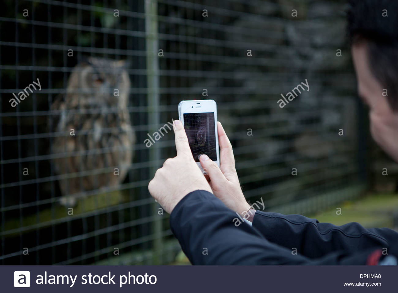 Visitor to a falconry centre using a smartphone camera to capture an image of an owl in captivity. - Stock Image